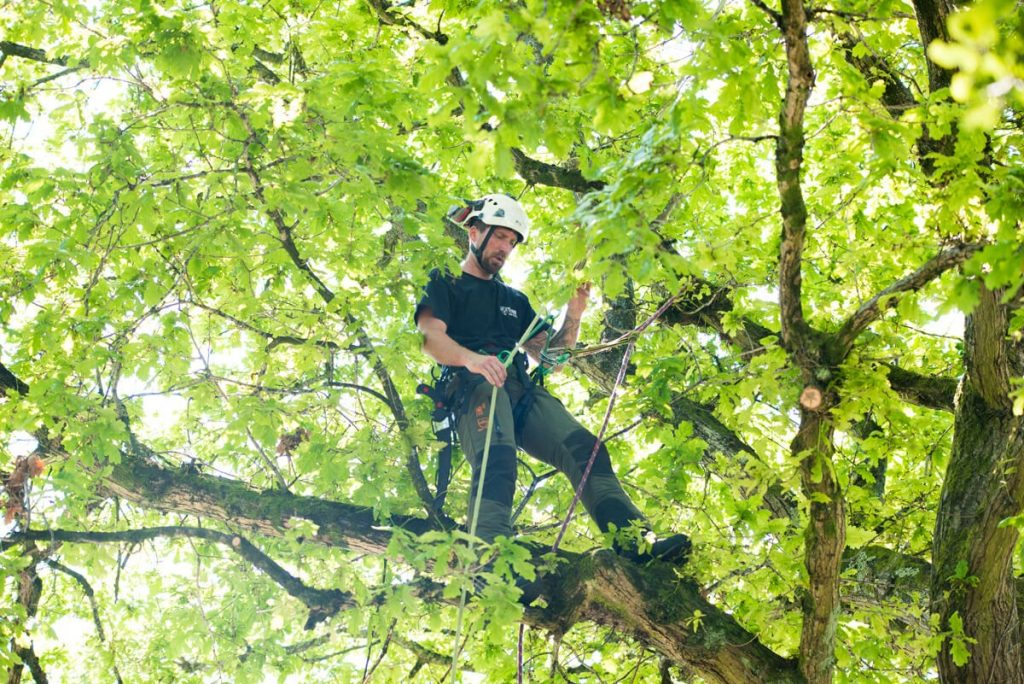 Top Qualities of a Tree Removal Company