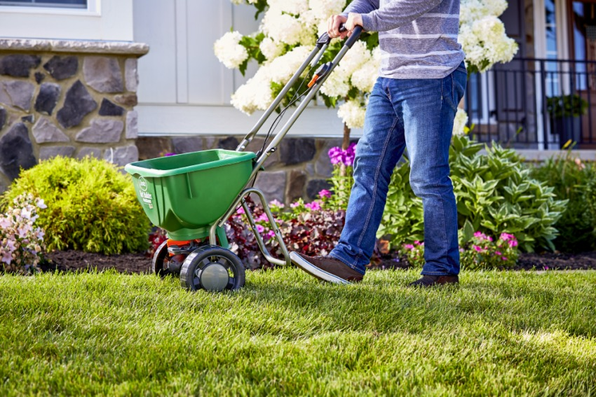 7 Lawn Care Tips for You