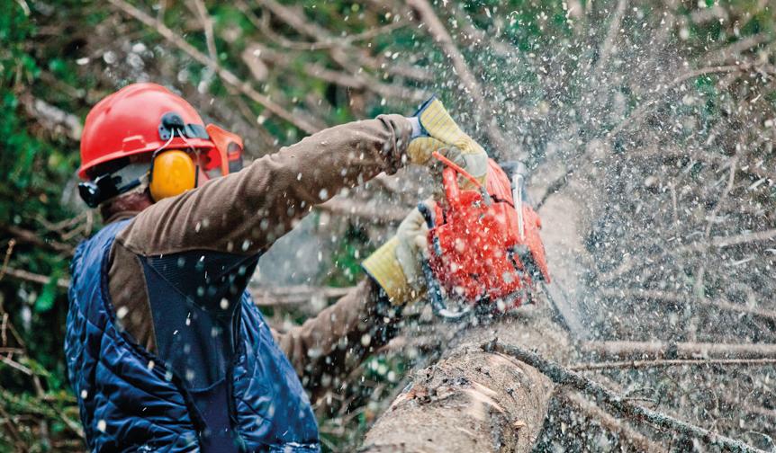 How do I select the right Tree Surgeon